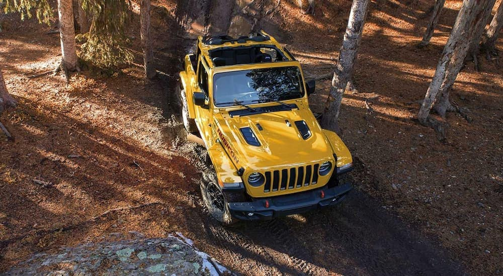 A yellow 2019 Jeep Wrangler is off-road in the woods after leaving a used car dealership near me in Indiana, PA.
