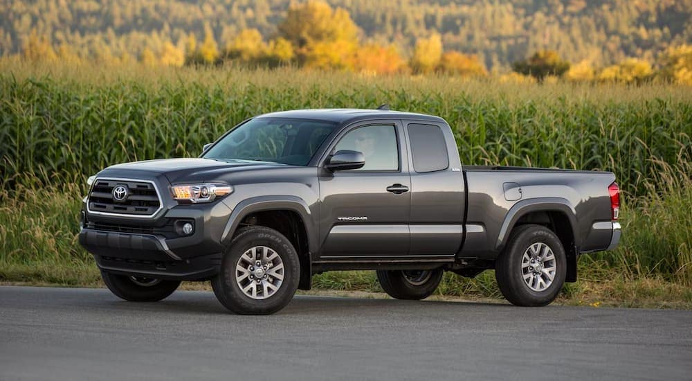 A grey 2016 Toyota Tacoma is parked in front of a corn field near Indiana, PA.