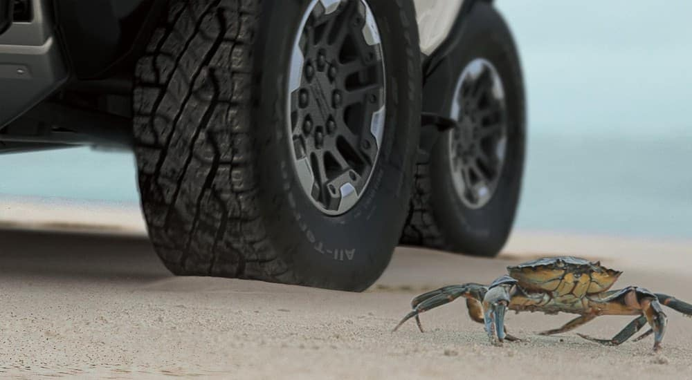 A closeup shows a crab in front of the wheels of a 2022 GMC Hummer EV, which will be coming to a GMC dealer in Indiana, PA.
