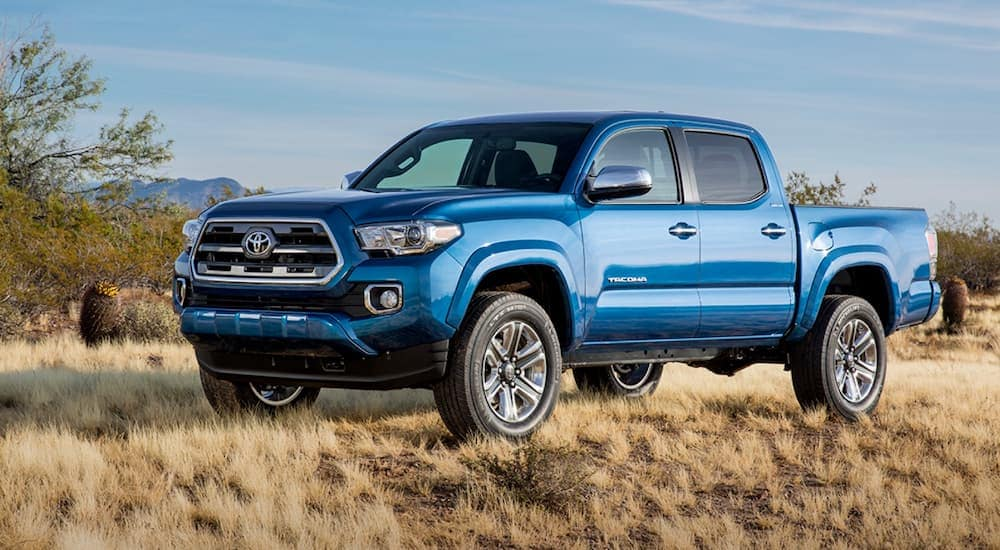 A blue 2019 Toyota Tacoma, which is popular among used Toyota Tacomas for sale, is parked on dirt and dry grass.