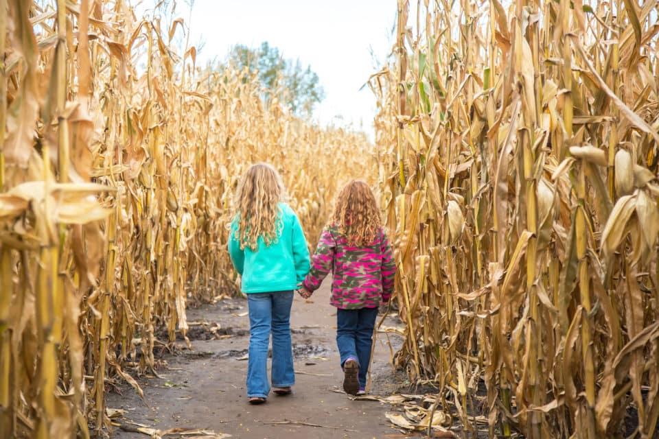 corn maze kids